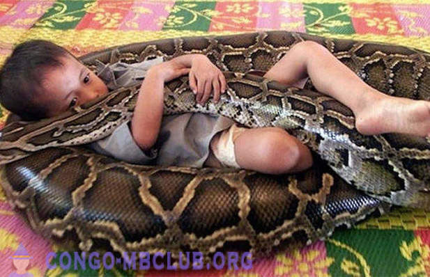 Amazing friendship boy and a 5-meter python