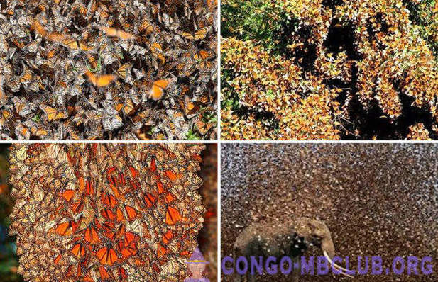 The most famous clusters of insects