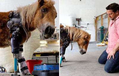 American doctor Aibolit: orthopedic prosthesis manufactured for ponies