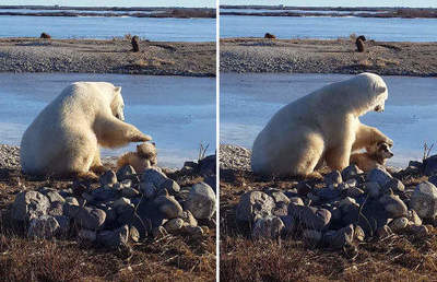 Surprisingly tender friendship of a polar bear and a dog - video