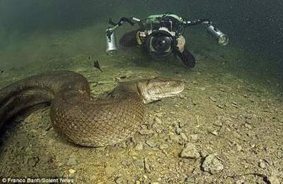 Divers risked life, swim with anacondas