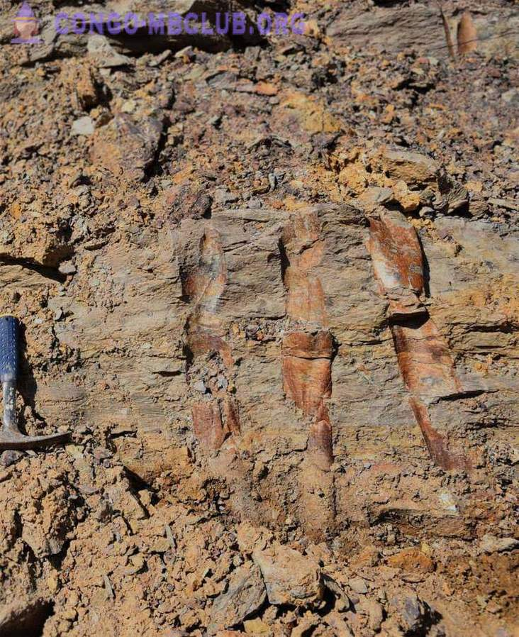 In China, found fossil forests 400 million years of age