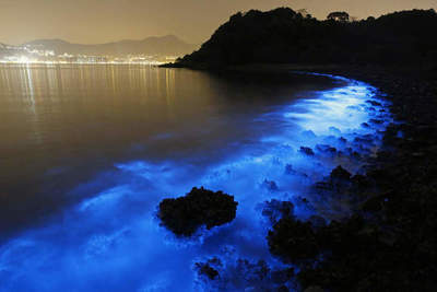 The glow of the living organisms in the sea in Hong Kong