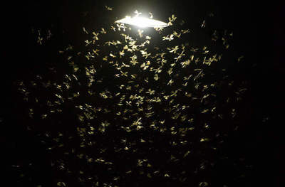 Why moths fly into the light?