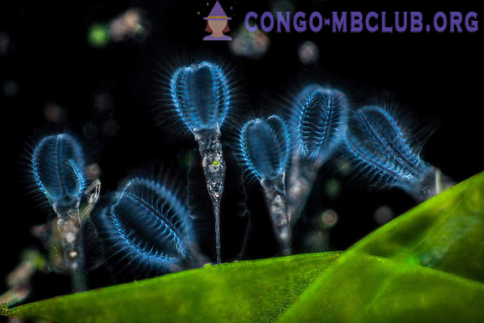 The winners of the contest photomicrography Nikon Small World 2017