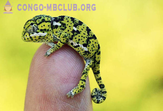 Meet: kids-chameleon, the most fascinating creatures in the world!