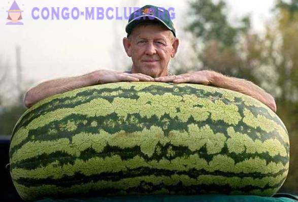 Interesting facts about watermelons