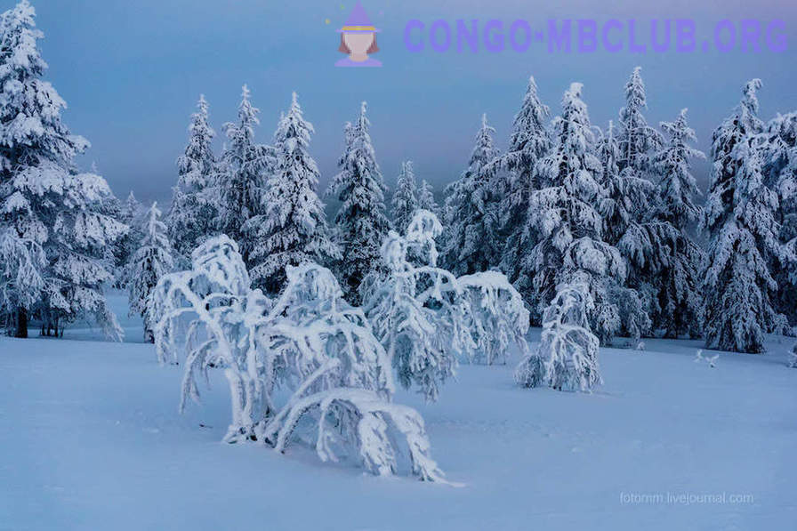 Finland. Snowy landscapes