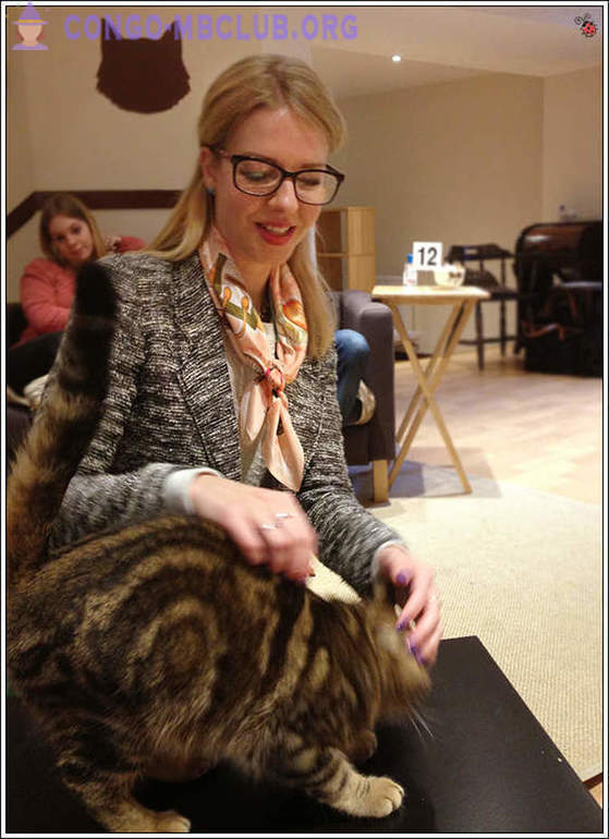 Cat Café in London