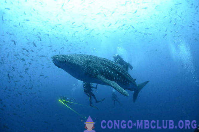 Amazing creatures in the Galapagos Islands