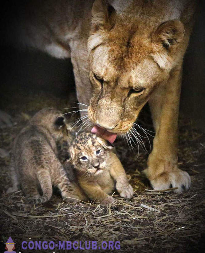 Animals and their cubs