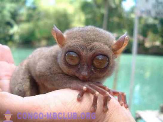 10 animals with enormous eyes